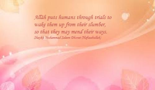 bgpic peach trials.png