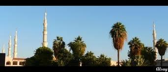garden of saqifa3.jpg