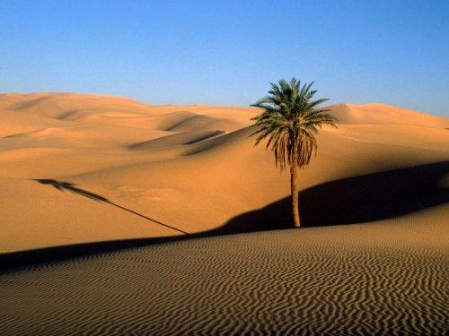 morocco-desert-palm-768x576.jpg