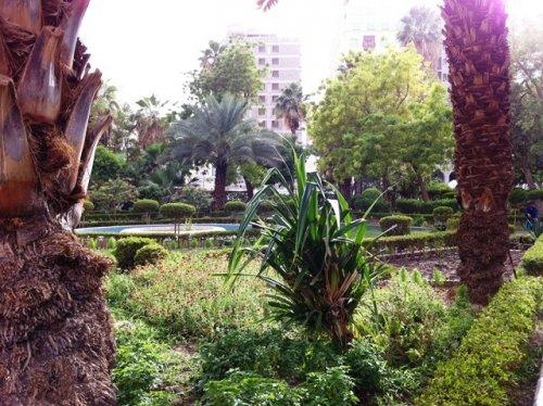 Saqeefa-May-2013u.jpg