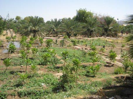 well of uthman plantation near well.jpg