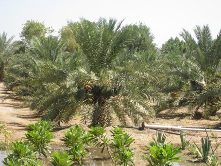 well of uthman plantation near well 2.jpg
