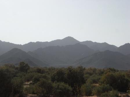 Al Ghaba Forest - timber used for mimber.jpg